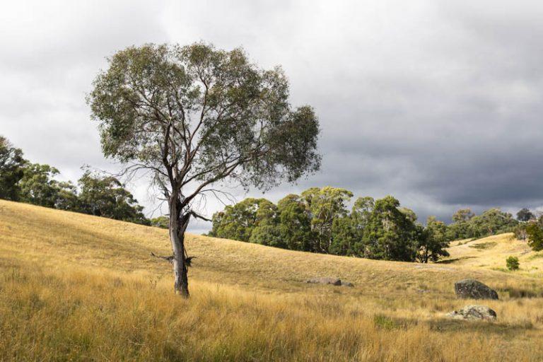 Bald Hill Creek, Strathbogie