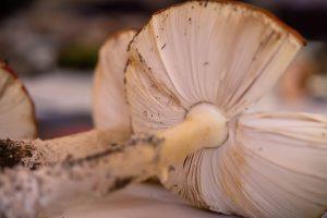 Alsion Pouliot Workshop - Festival of Fungi 2021